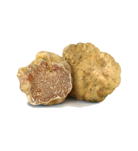 White truffle (Tuber Magnum Pico)