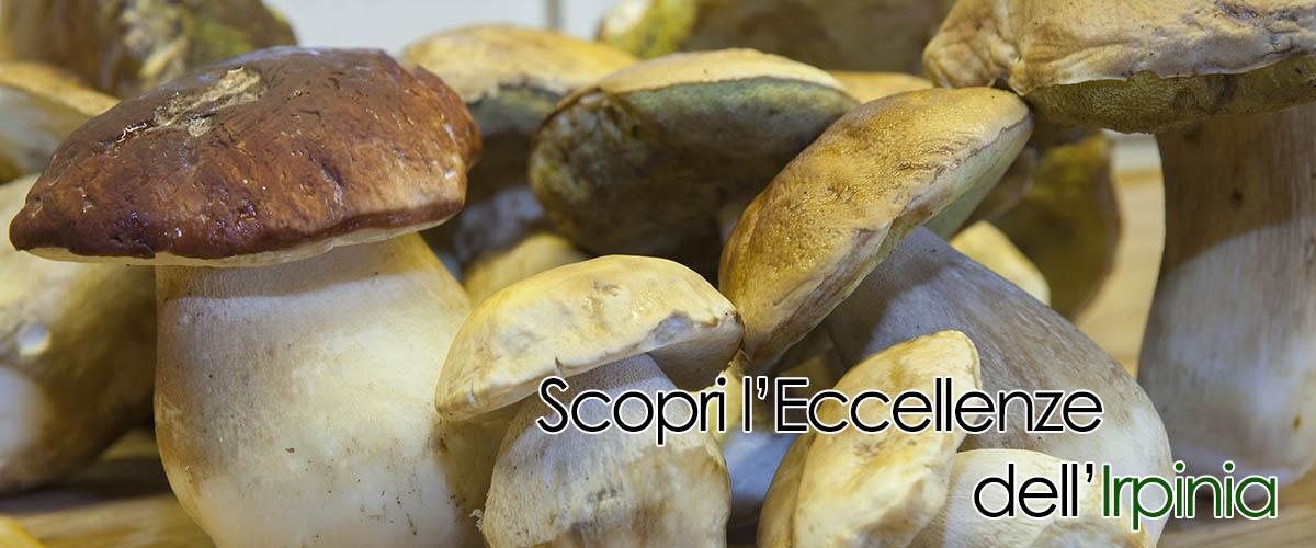 Scopri la sezioni di funghi porcini