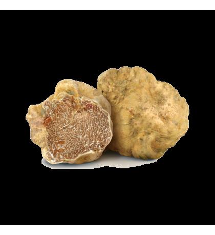 Truffe blanche (Tuber Magnum Pico)